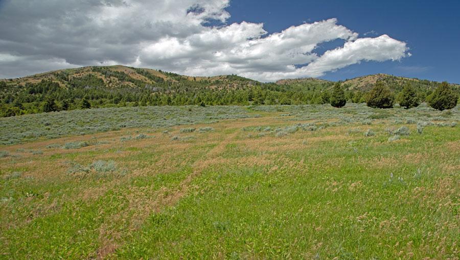 Divide Creek Pasture