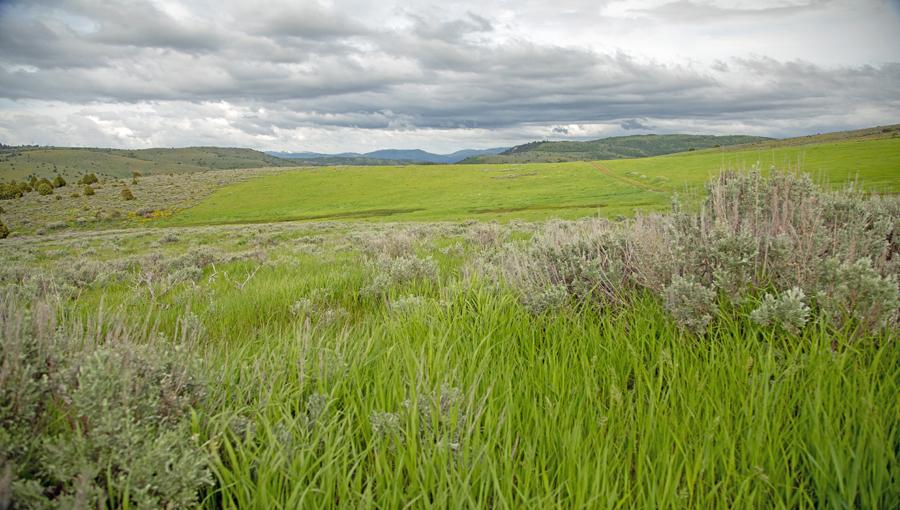Elk Springs Pasture