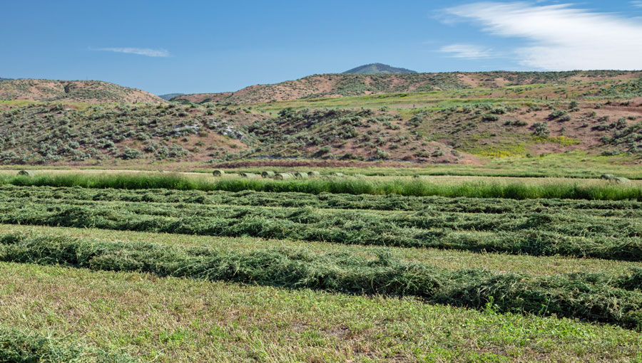 Red Rock Ranch Home Place Cut Hay