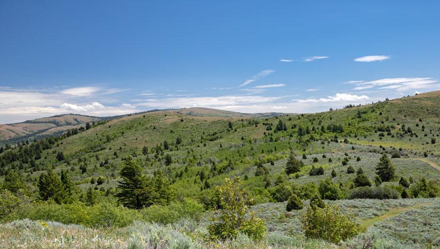 Summit Pasture